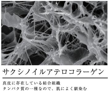 サクシノイルアテロコラーゲンは真皮に存在している結合組織。タンパク質の一種なので肌によく馴染む
